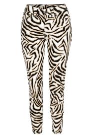 P1161AC Jacky Zebra